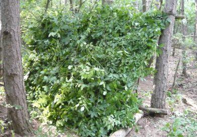 Természetes menedék – Féltetős menedék és a Willow bed
